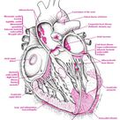 Cardiac Pathology