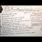 Cranial Nerves - One Minute Medical School