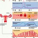 Changing hormones during menstrual cycle
