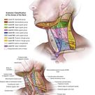 Anatomic Classification of the Zones of the Neck