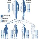 Niemann-Pick disease refers to a group of fatal inherited metabolic disorders.