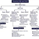 Classification of Hemolytic Anemia: - Google Search