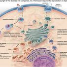The endomembrane system is composed of the different membranes that are suspended in the cytoplasm