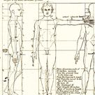 how to draw human proportions