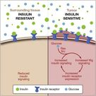 Insulin Resistance Syndrome