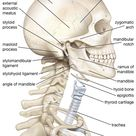 Skull and spine anatomy lateral view
