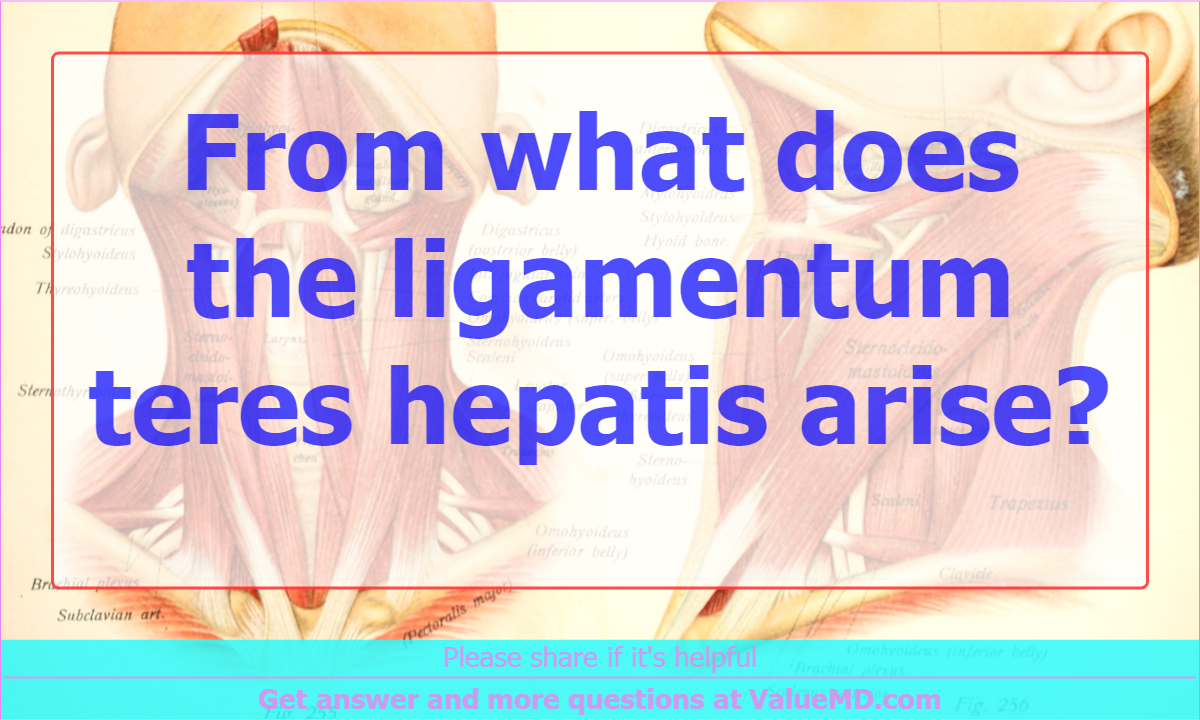 From what does the ligamentum teres hepatis arise?, Anatomy ...