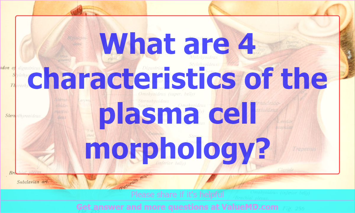 What are 4 characteristics of the plasma cell morphology?