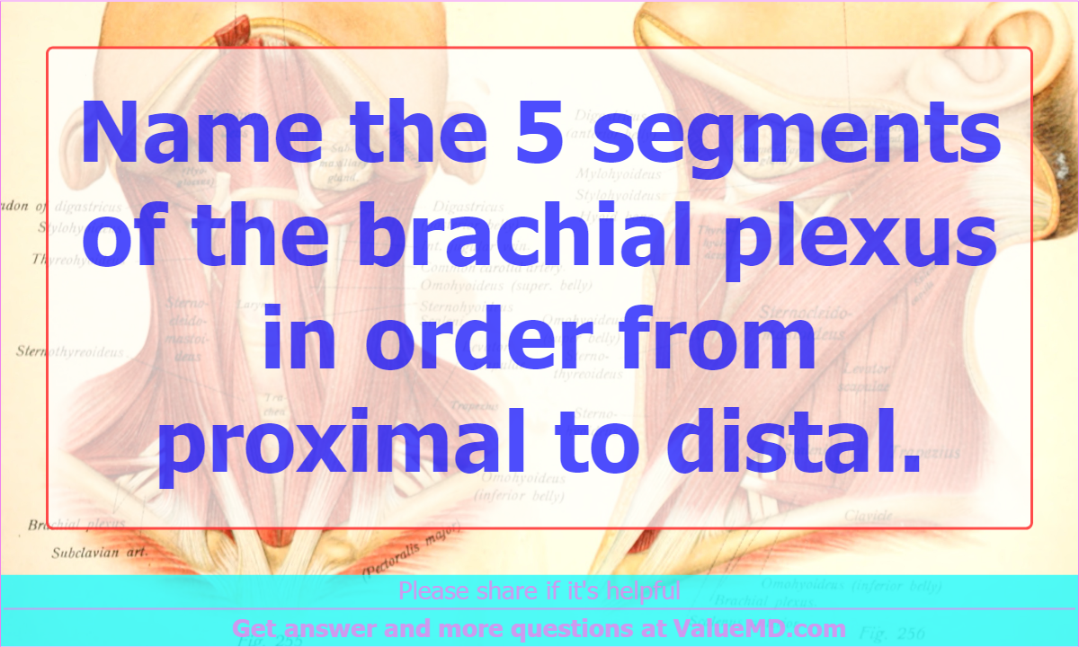 Name The 5 Segments Of The Brachial Plexus In Order From Proximal To