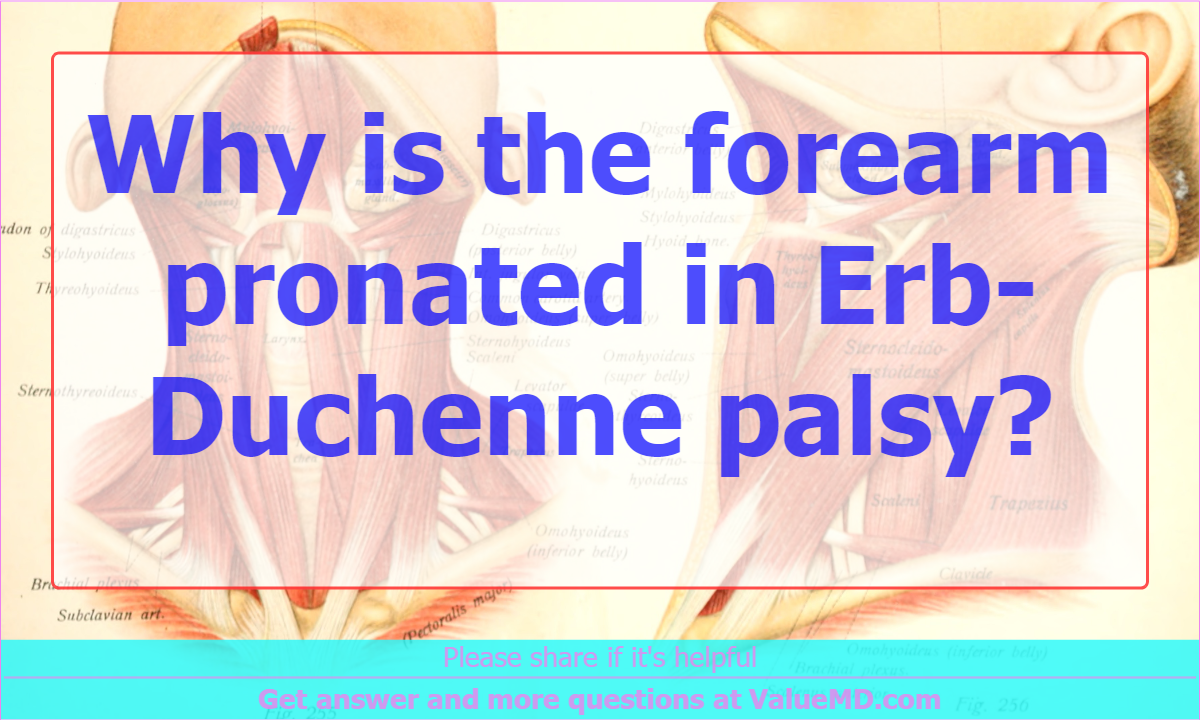 Why is the forearm pronated in Erb-Duchenne palsy?