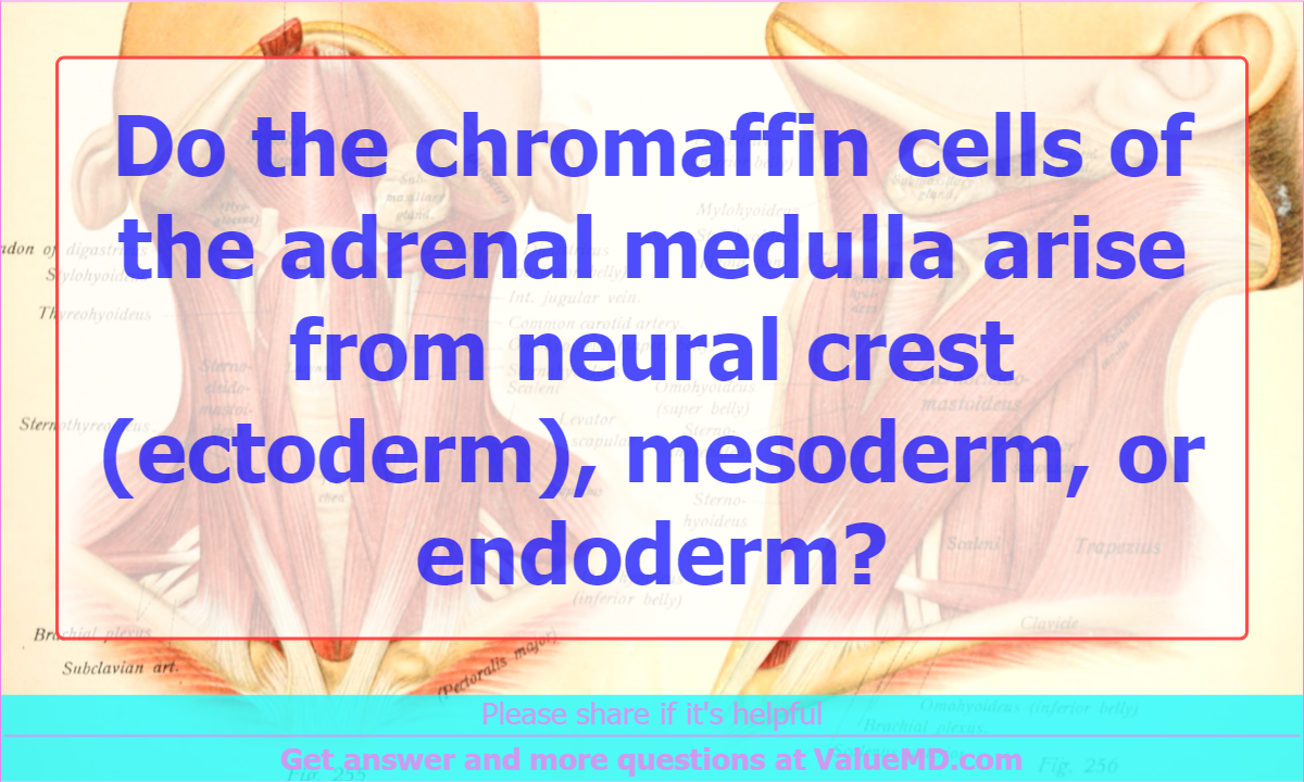 Do the chromaffin cells of the adrenal medulla arise from neural ...