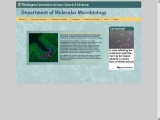 Department of Molecular Microbiology, Washington University (St. Louis)